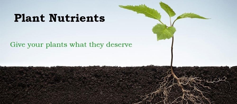 Plant nutrients tropicanna horticulture store in derby for Soil nutrients